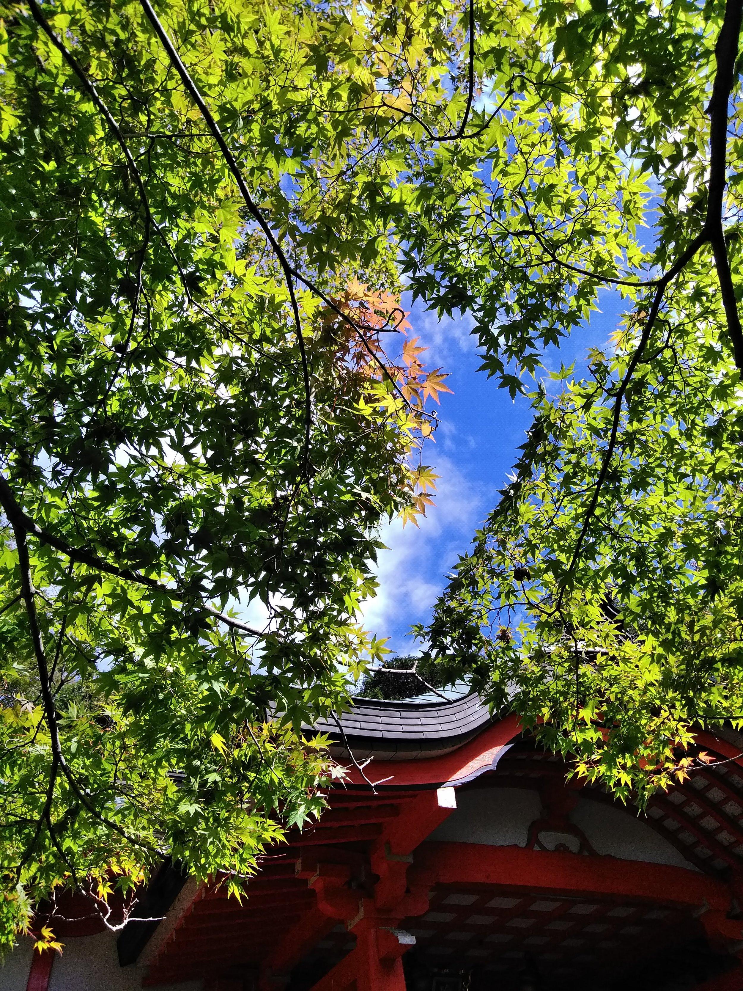 Momiji at Yuga Shrine