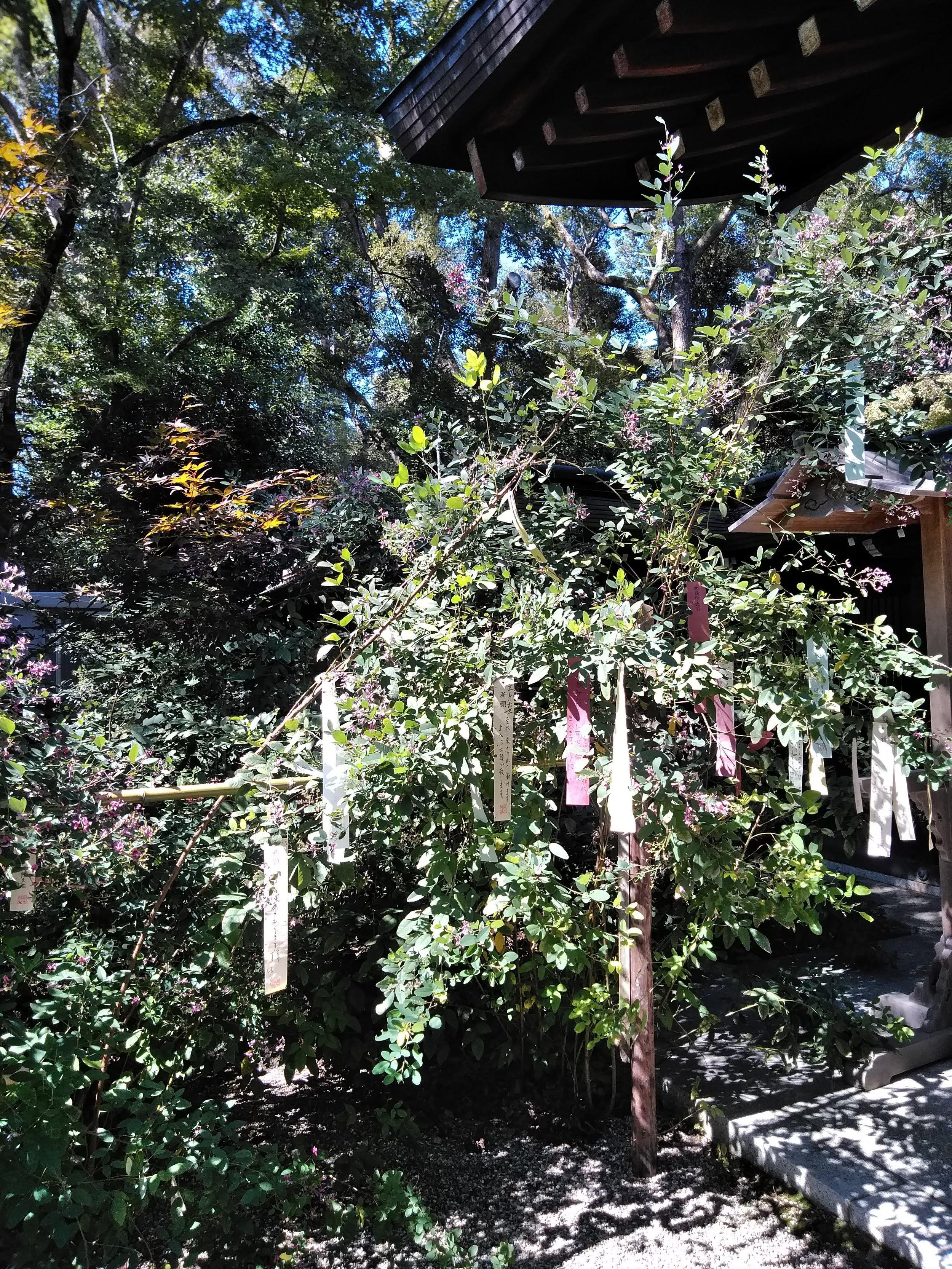 Hagi in Nashinoki Shrine