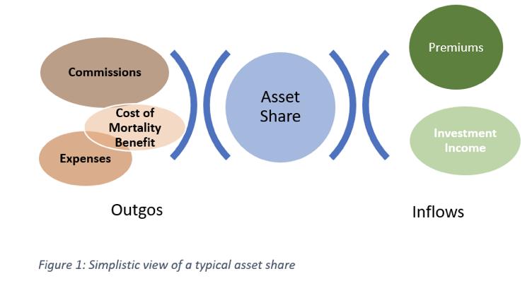 asset share endownment.png