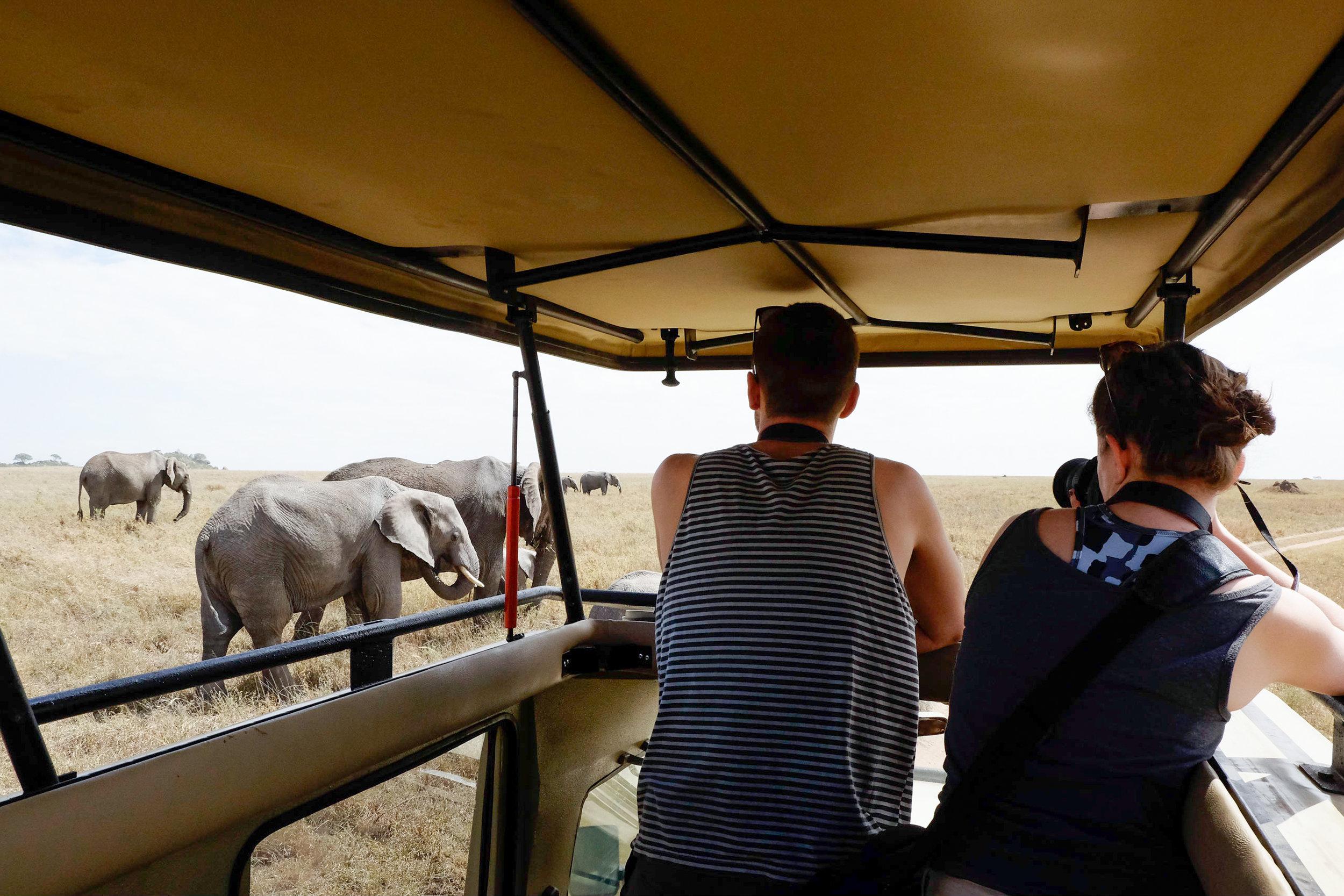 Budget_safari_Tanzania.jpg