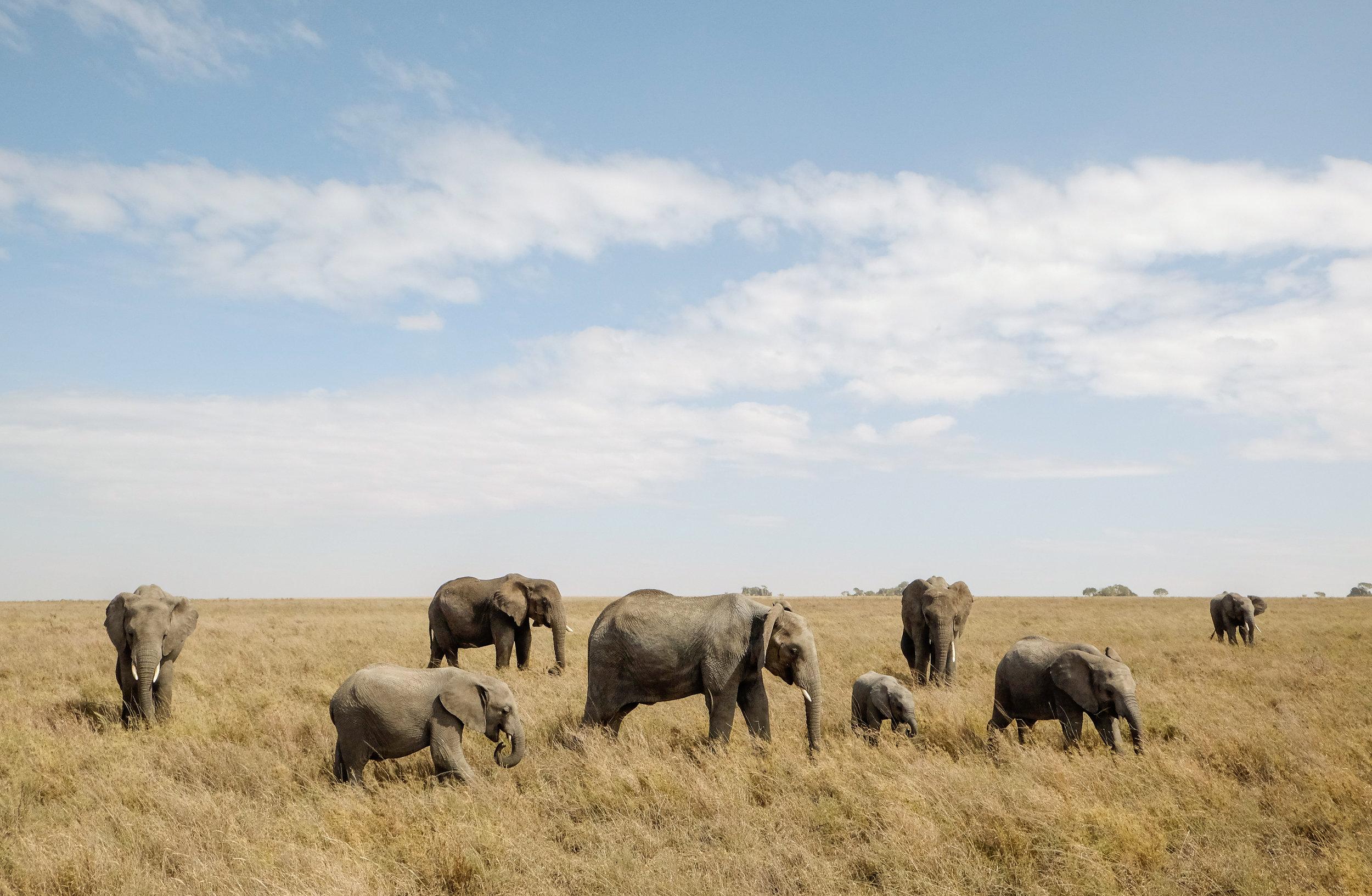 affordable_serengeti_safari.jpg