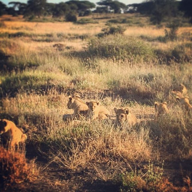 Little family relaxing in the early morning hours in the Serengeti national park. With rustic safari, your guide will do everything possible for you to see all the wild life and surprises of the national parks, even if this means to wake up at 5 am!