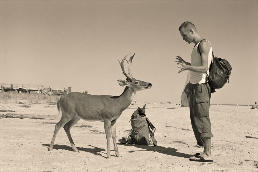 Wolfgang Tillmans,  Deer Hirsch , 1995