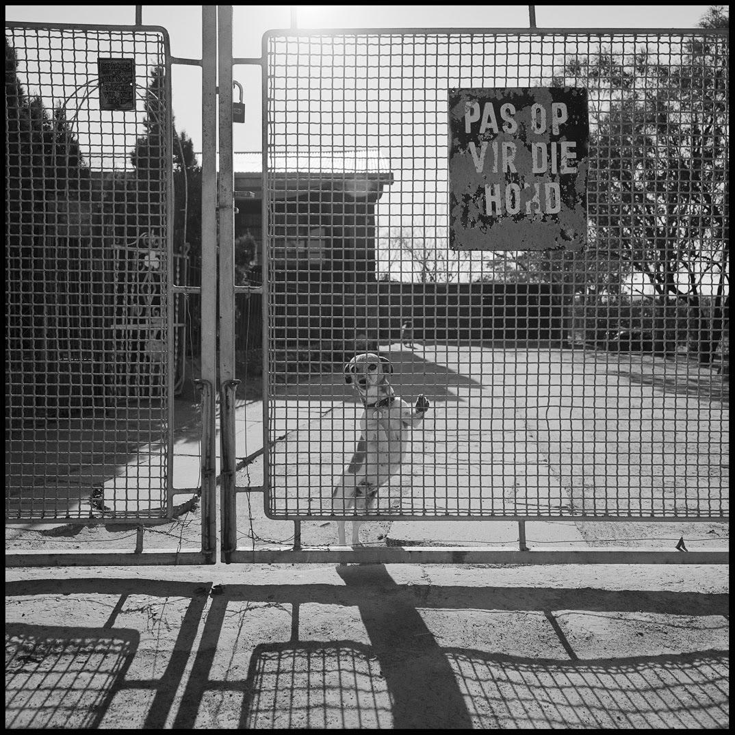 Beware of small dog behind big gate.jpg