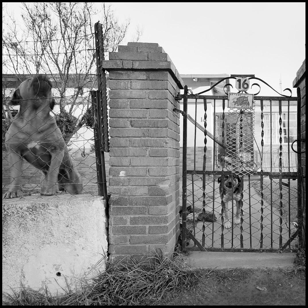 Beware of barking dogs at No 16.jpg