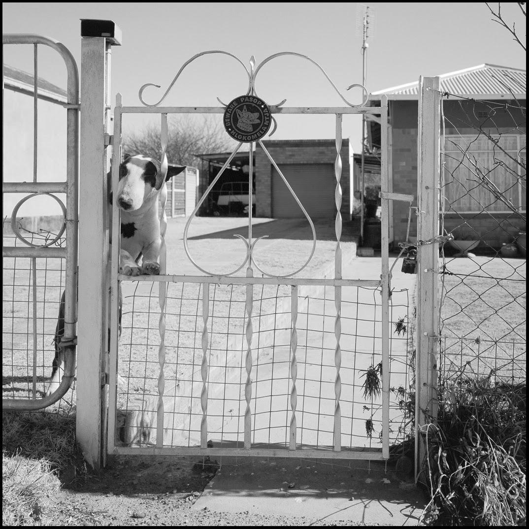 Beware of dog behind curly gate.jpg