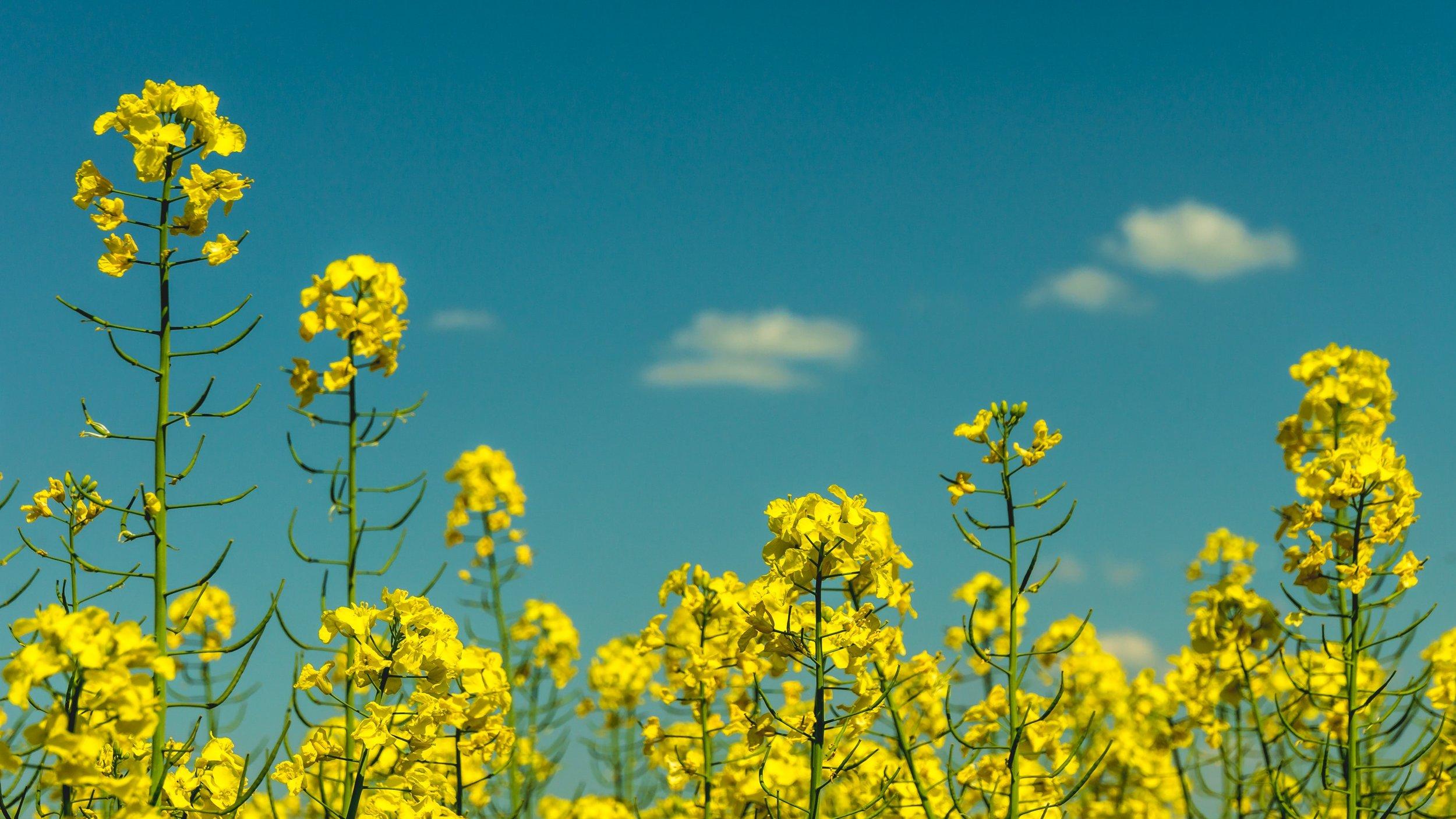 flora-flowers-nature-102083.jpg