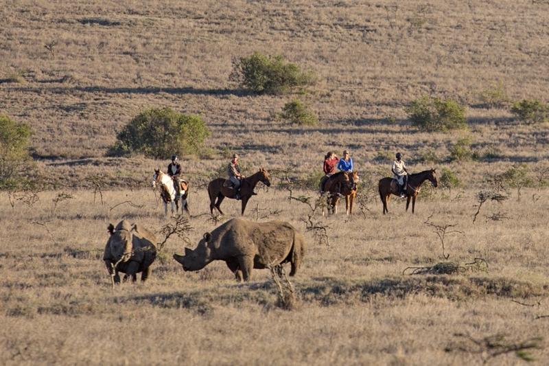 rhinos and horses.jpg