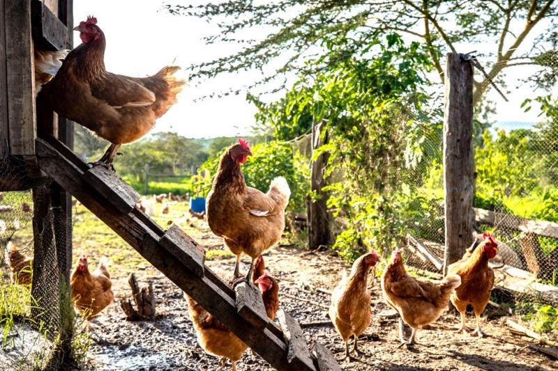 Farm to Fork_1.jpg