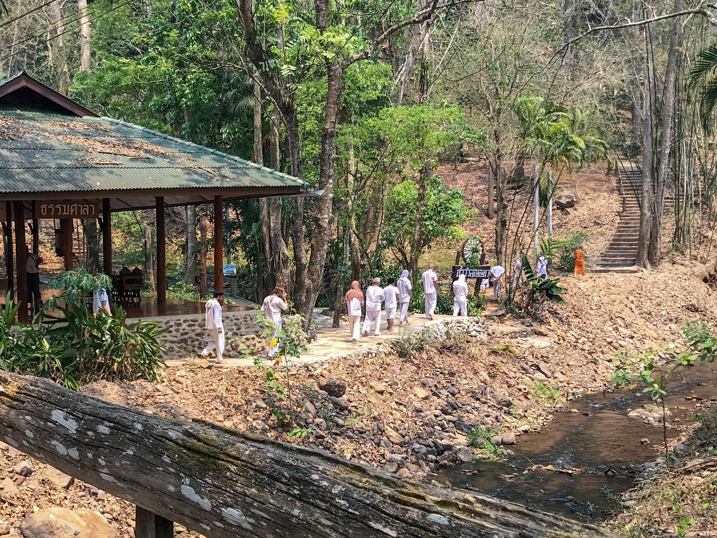 Sétáló meditáció az erdőben