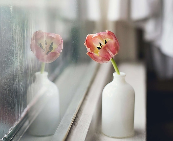 flower in window.jpg