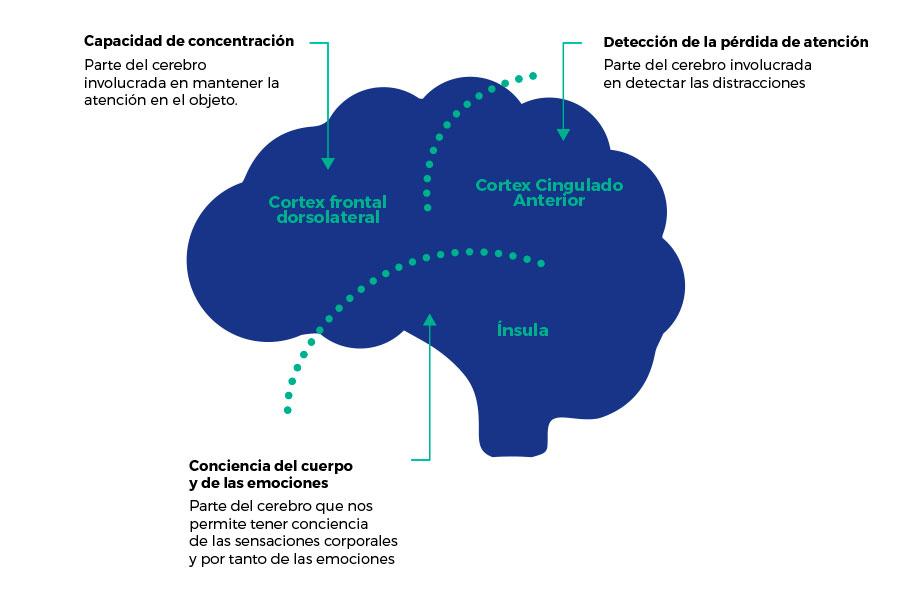 Mindfulness-ciencia.jpg