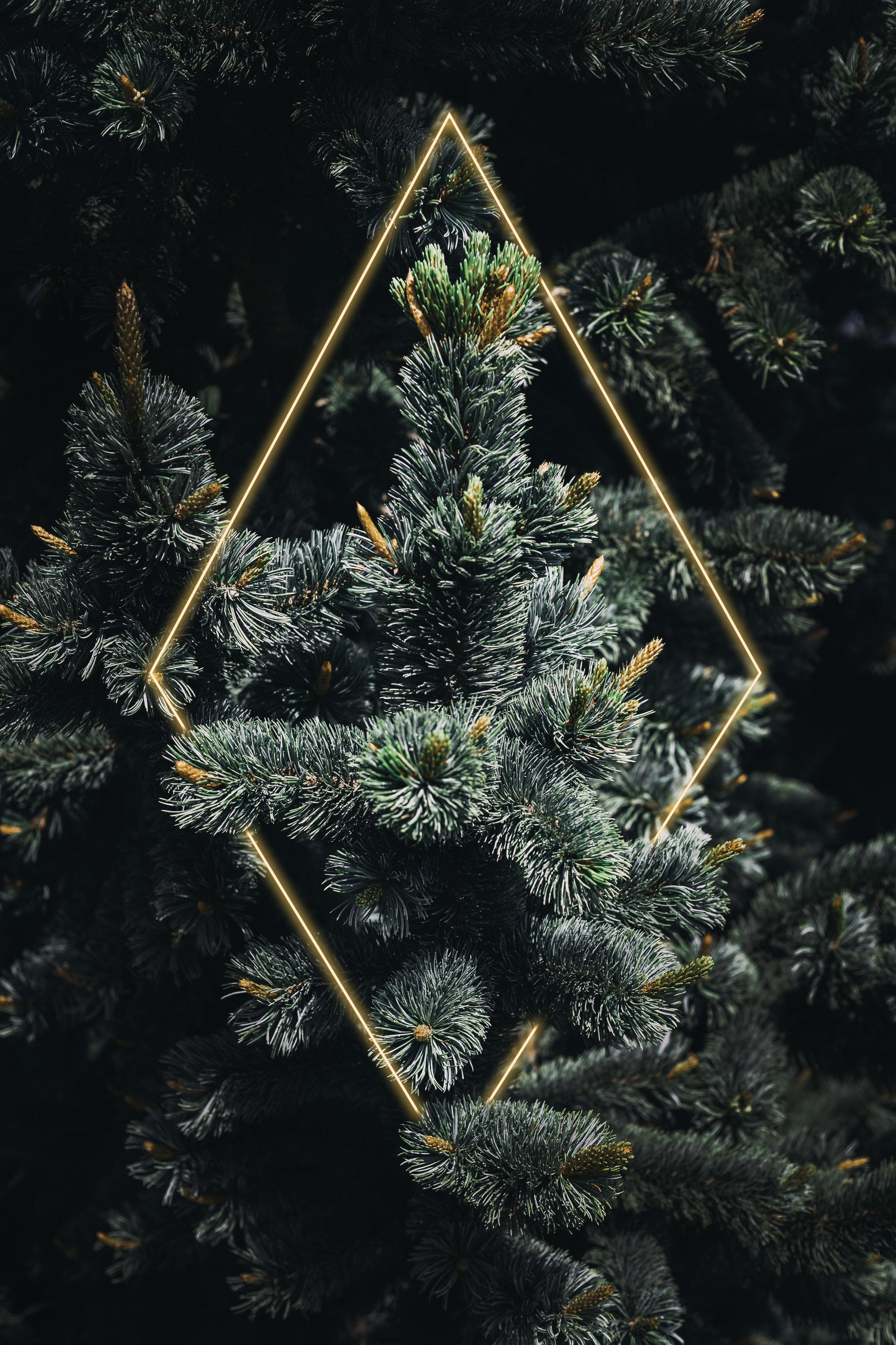 evergreen diamond.jpg