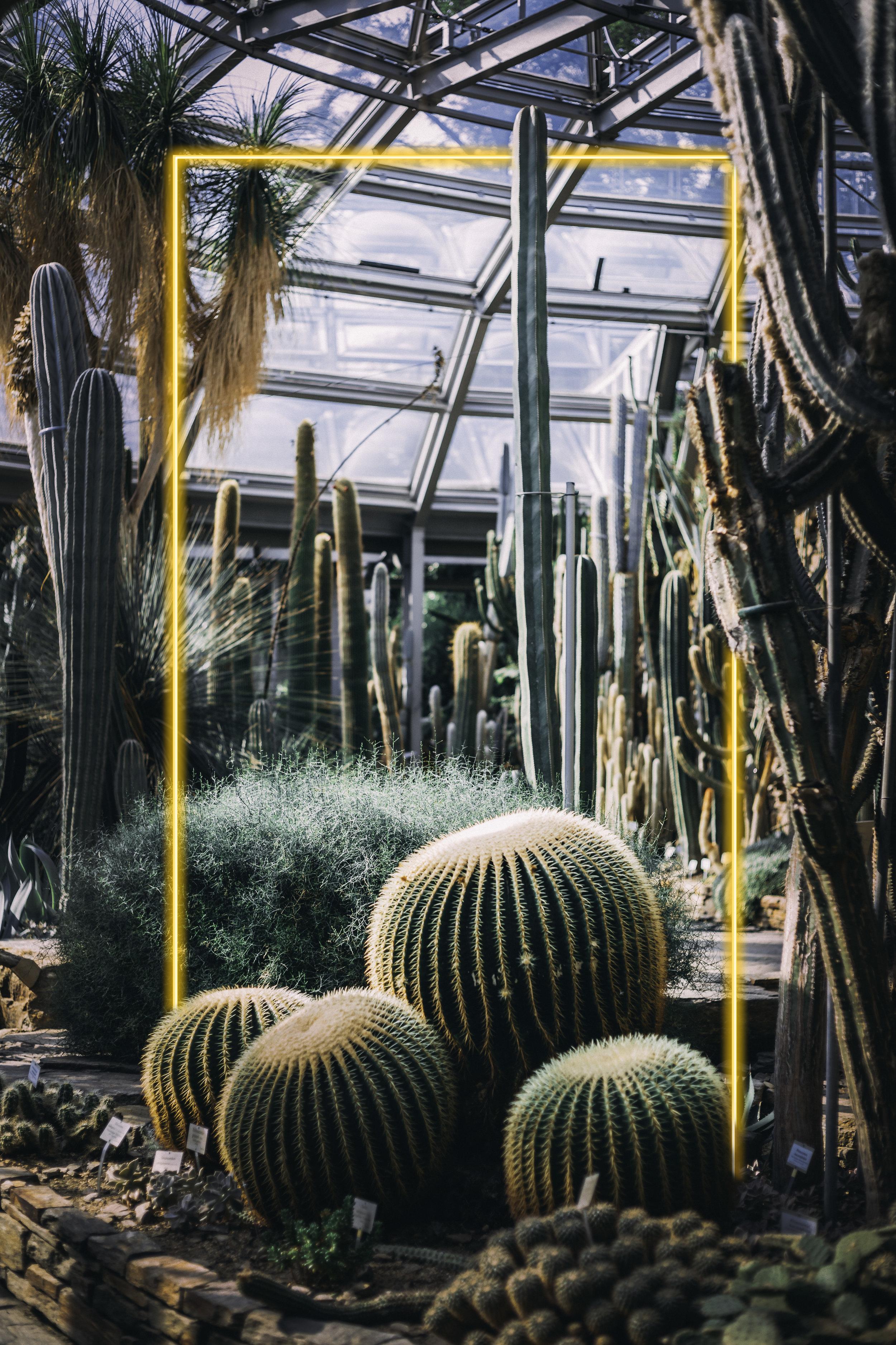 cactus rectangle.jpg