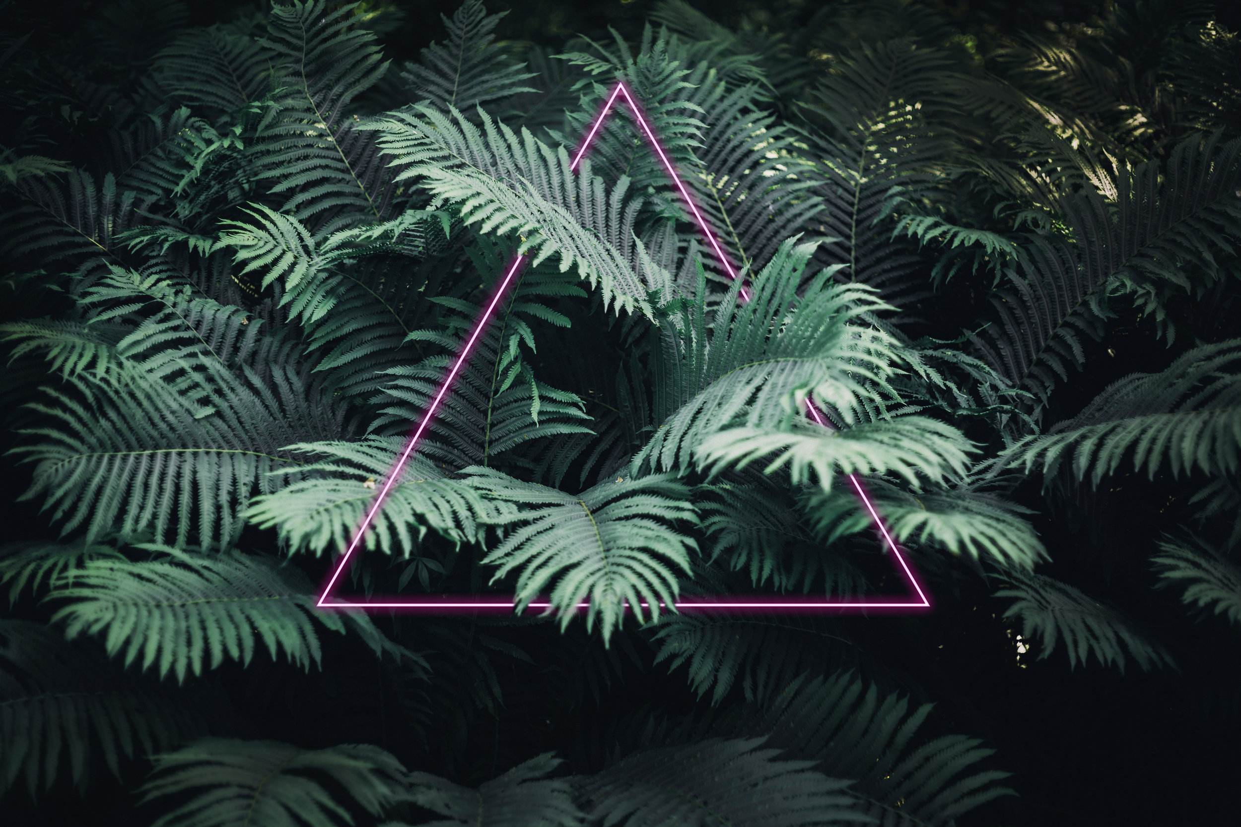 ferns with neon triangle.jpg