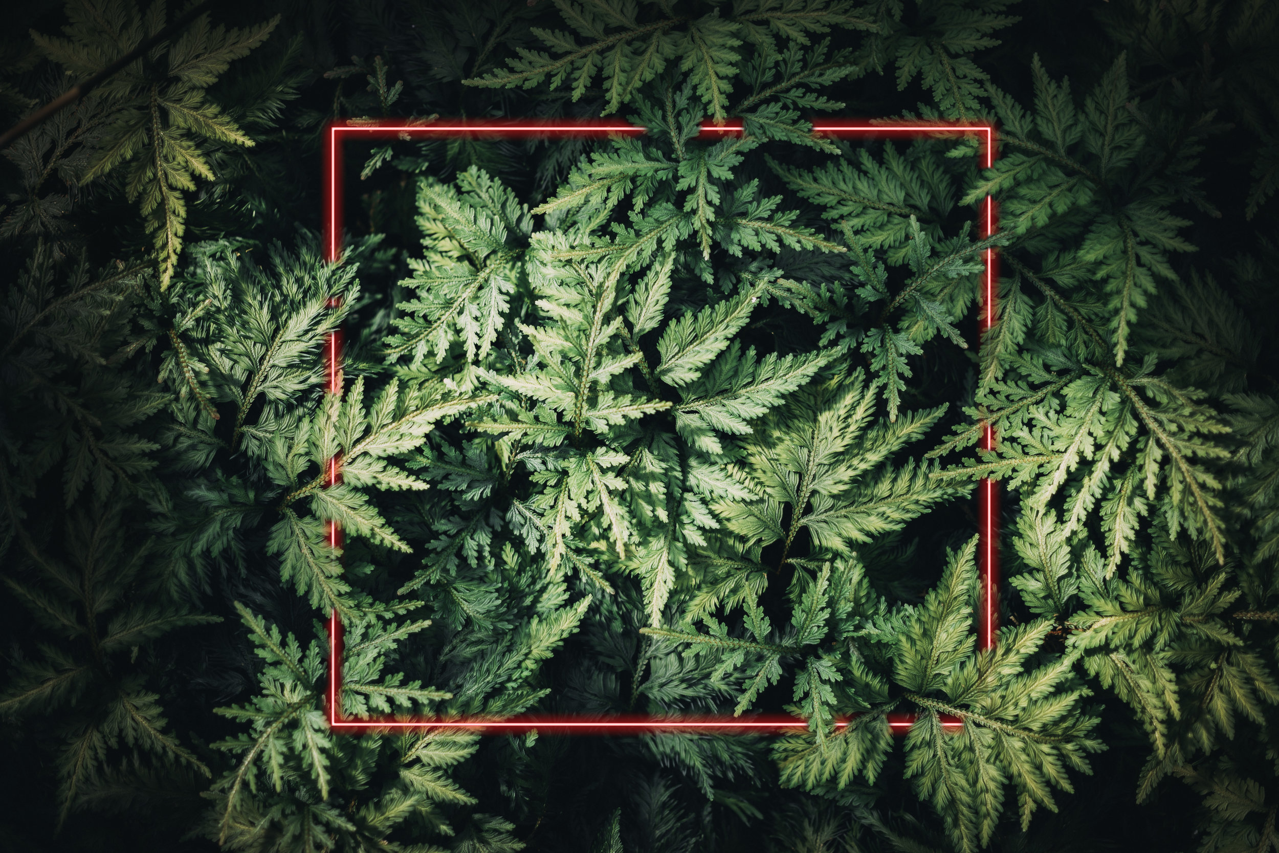 ferns and red square.jpg