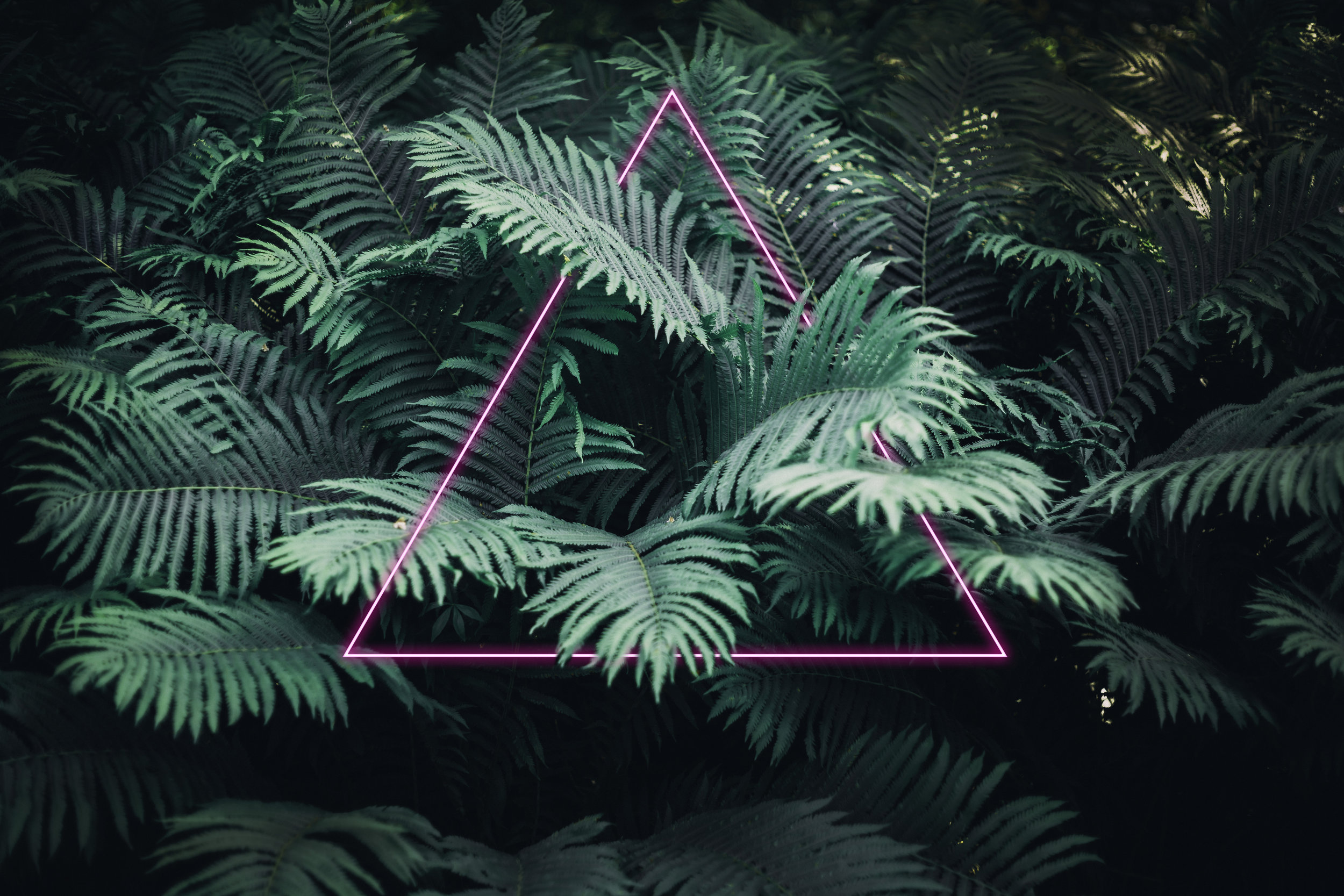ferns with neon triangle 16 bit.jpg