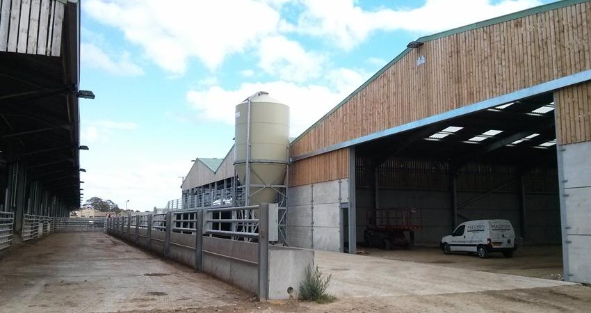 cattle_feed_sheep.jpg