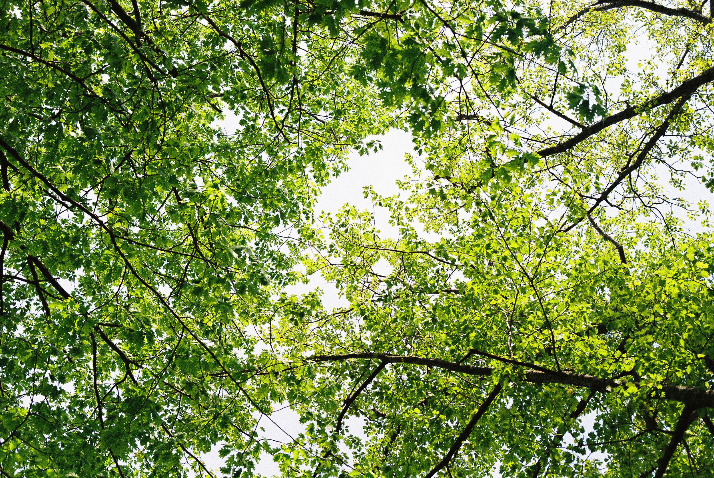 Upwards through the trees
