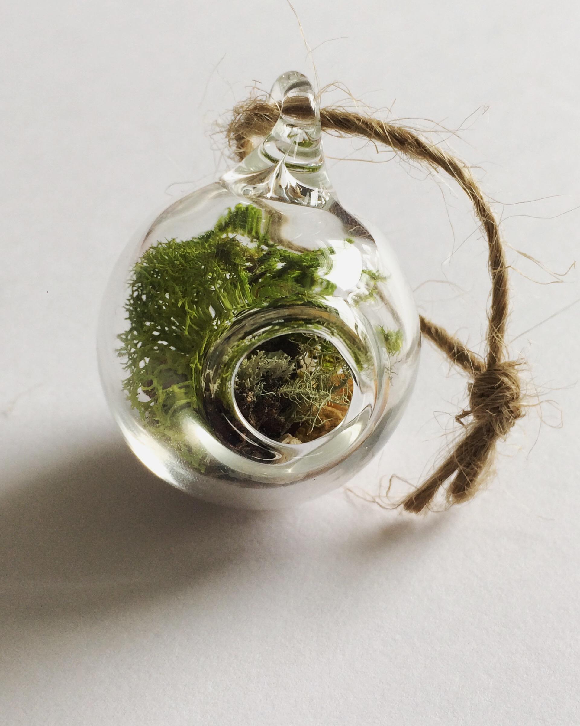 Mini Glass Terrarium Tree Ornament - Brook Drabot Glass