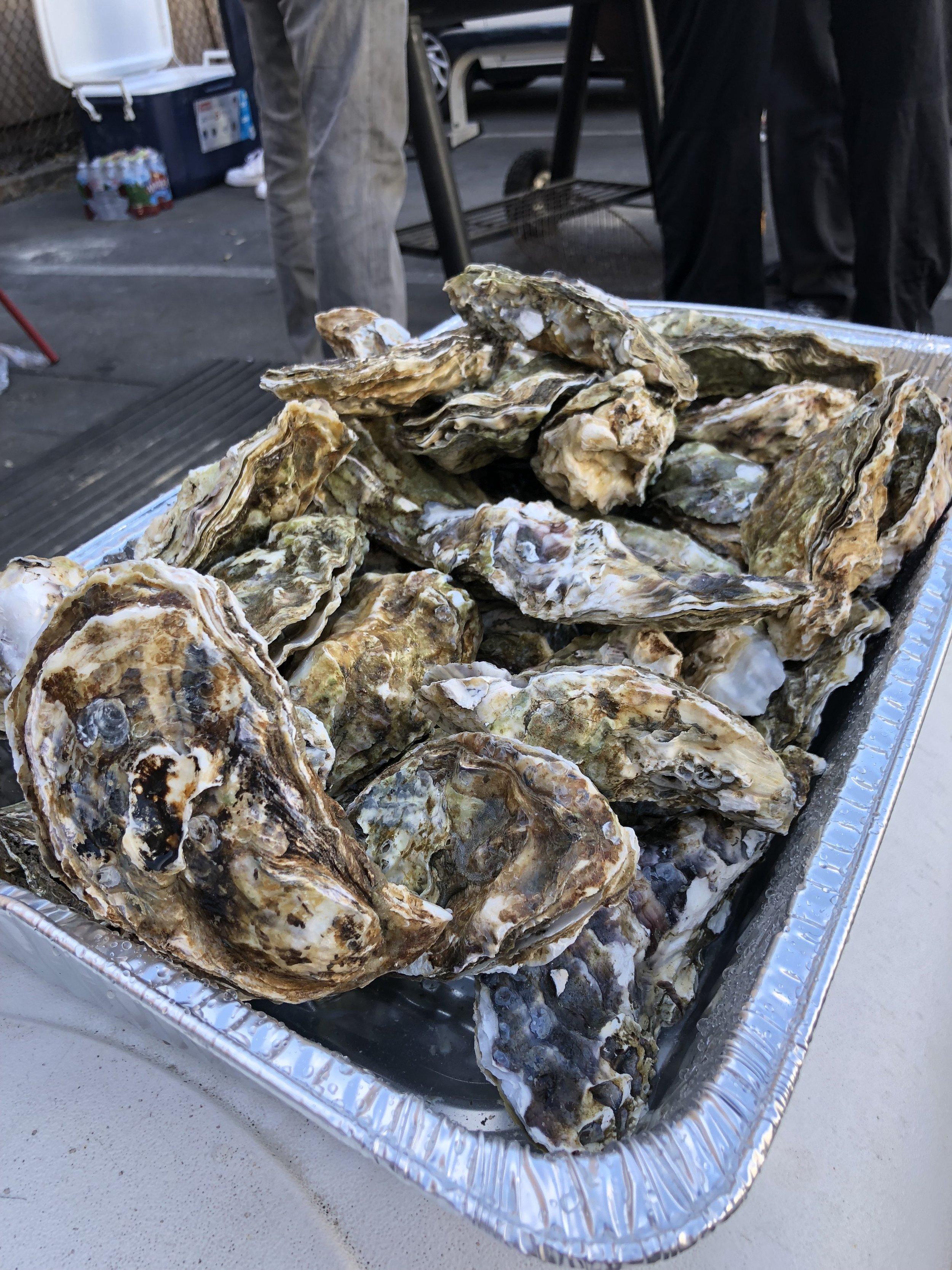 Cookout 2018 - Oysters hitting the grill