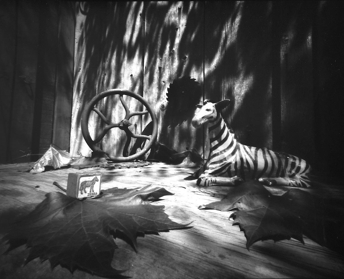 Still Life with Zebra (for Gina Litherland), 2014