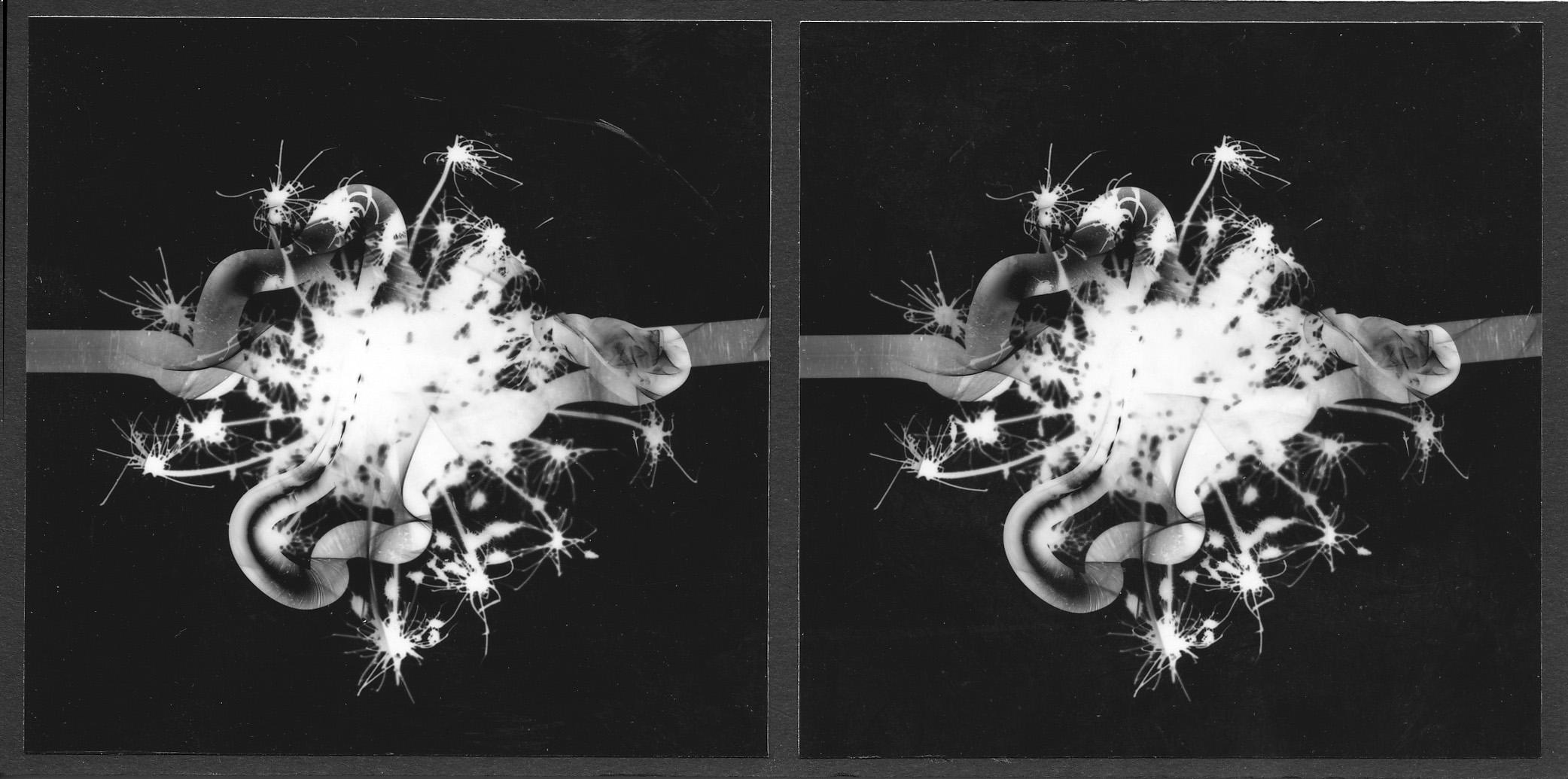 Stereo photogram, 1999