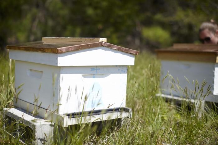 Barn of Chapel Hill Bee Hive