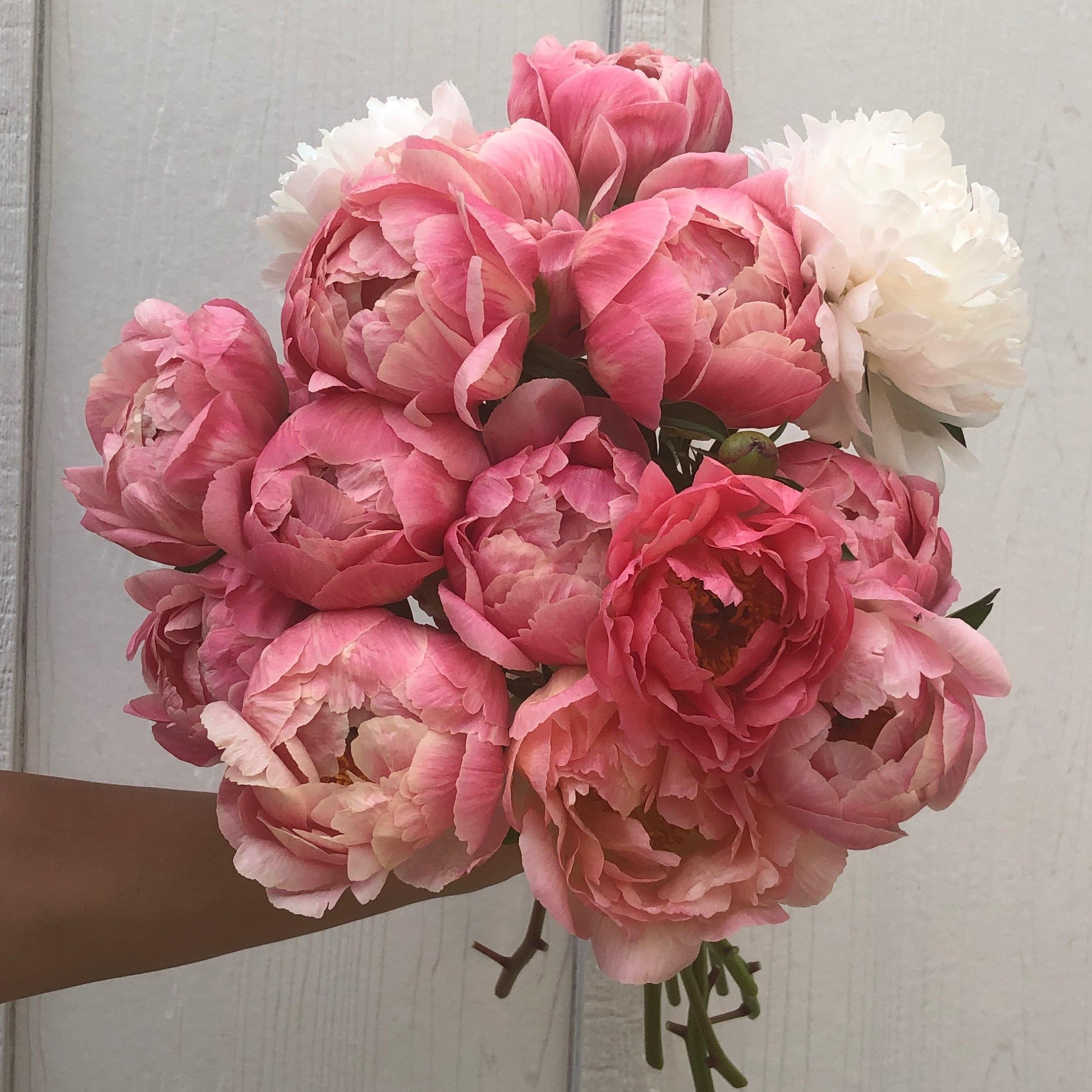 wild_flora_farm_peony_bouquet.jpg