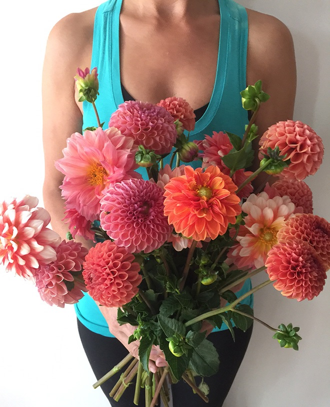 Dahlias 101 A Beginner S Growing Guide The Barn Of Chapel Hill