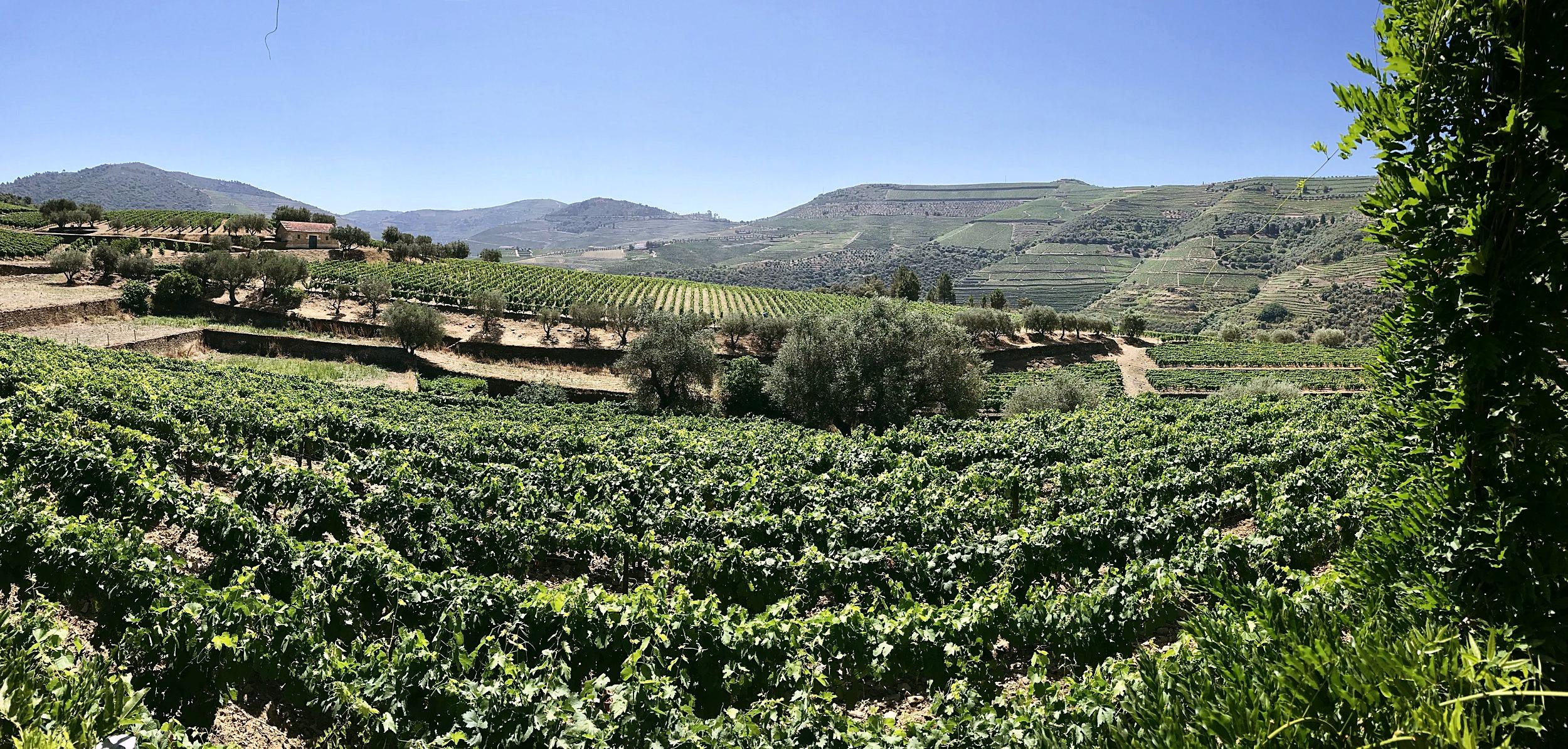 Douro Valley Port Wine Tour // microtomacro