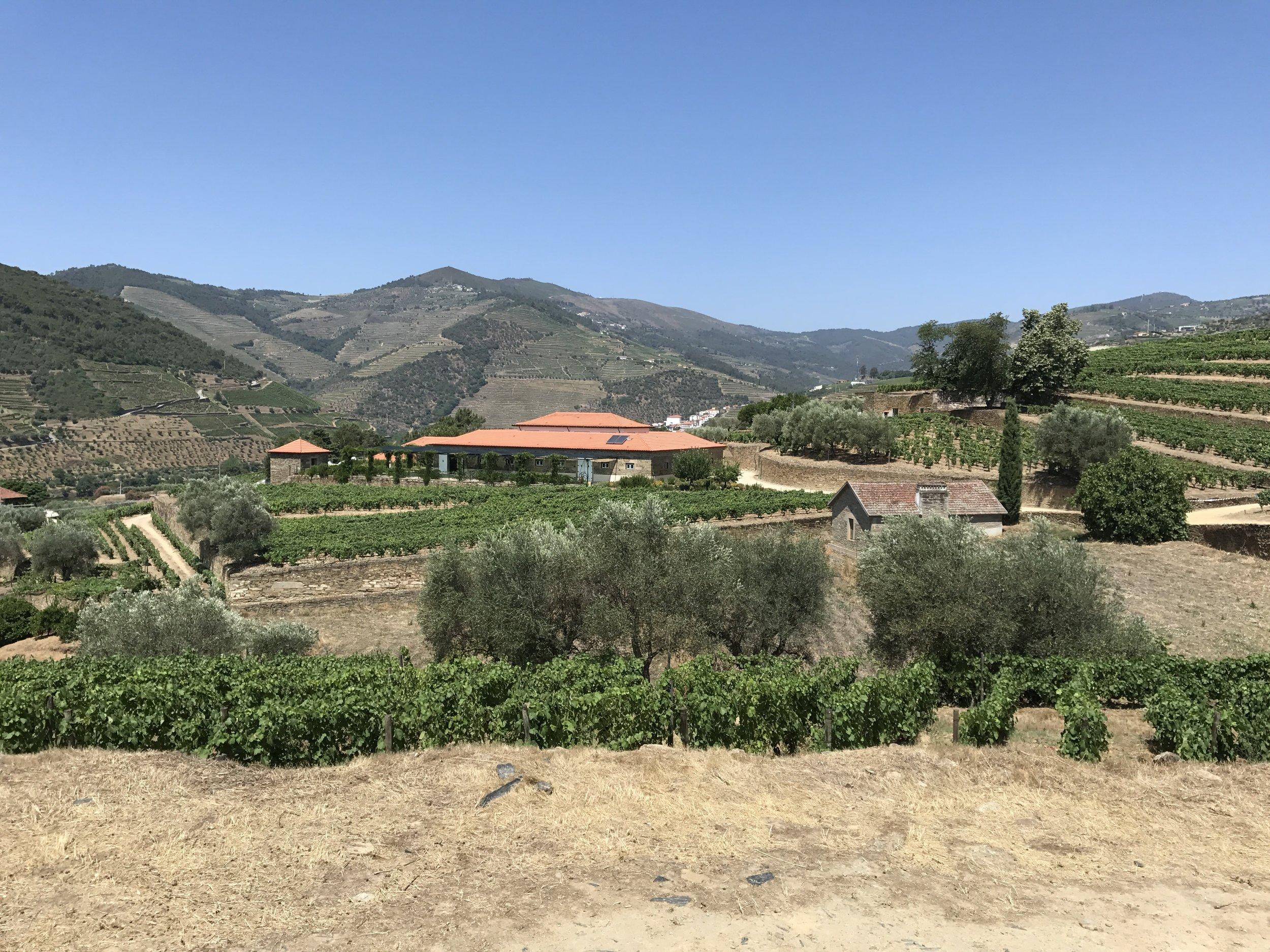 douro valley // microtomacro
