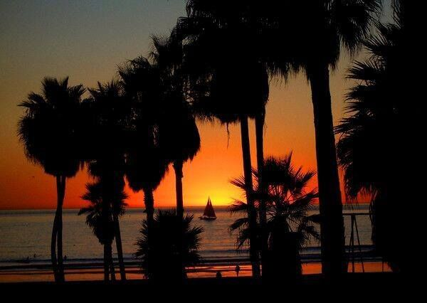 Another day comes to an end. What shall we do tomorrow?#photography #Venice #beach #losangeles #cali #socal #sunset #palmtrees