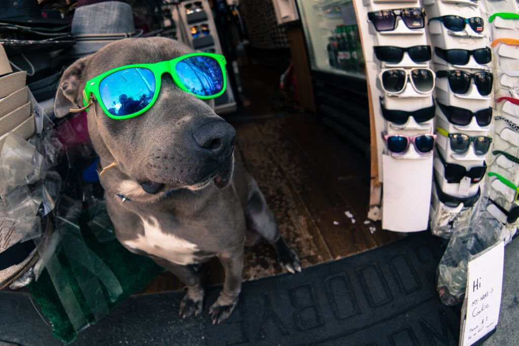 No one is able to deny that Venice vibe; not even the dogs! #chill #venice #vibe #beachlife #venicebeach #dogs #cute
