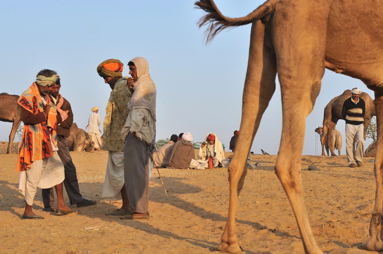 Pushkar Camel fair in Pushkar, Rajasthan, India. My attempt at a more complex combination of multiple scenes.