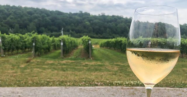 What's better than a refreshing glass of wine on a hot summer day in Niagara? Nothing! Join our daily tour to experience all our region has to offer. Register easily online- link in bio! 🍷 ☀️