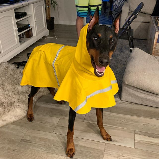 Water ✔️ Gas ✔️ Doggie Rain Coats ✔️ #HurricaneReady 🙌🏻