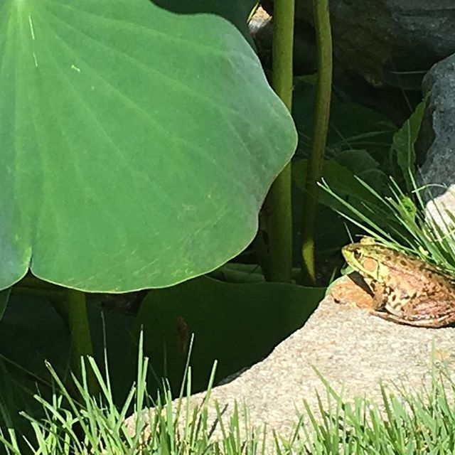 A little friend joined us at #GraceYoga this morning. #yogilife #northkingstown #frogs
