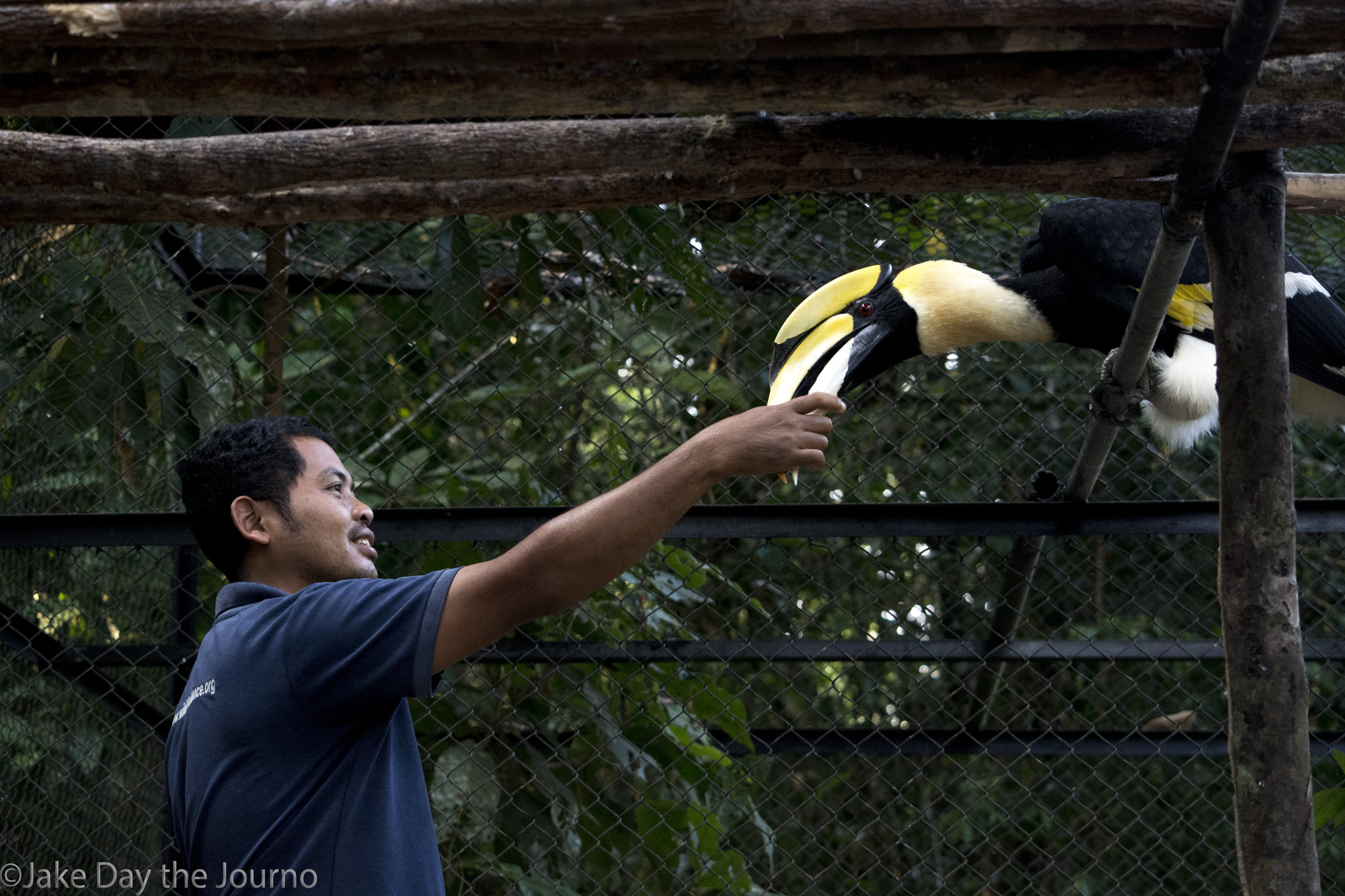 Wildlife keeper Seoun Chhean pats a Hornbill during the morning feeding session at Wildlife Alliance's Cardamom Mountains Release Centre on 09/01/2018 by Jake Day. The wildlife keepers live on site at the release centre and their work helps to support their families who live in the local villages.