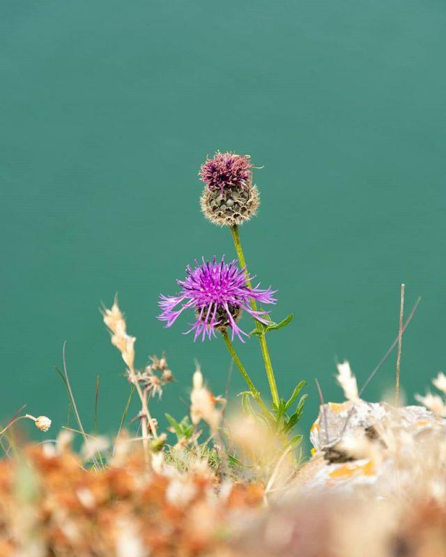 Worms Head, Rhossili, Wales.  #EverydayEverywhere #documentaryphotography #travelphotography #jakedaythe_journo #fujifilm #fujifilmx_uk @fujifilmx_uk #fujifilm_global @fujifilm_global #alwaysbristol #people #bristol #travel #bristol_lens #uk #United Kingdom #lighting_as_visual_language #peopleplacesthings #wormshead #wales #flowers #beautiful