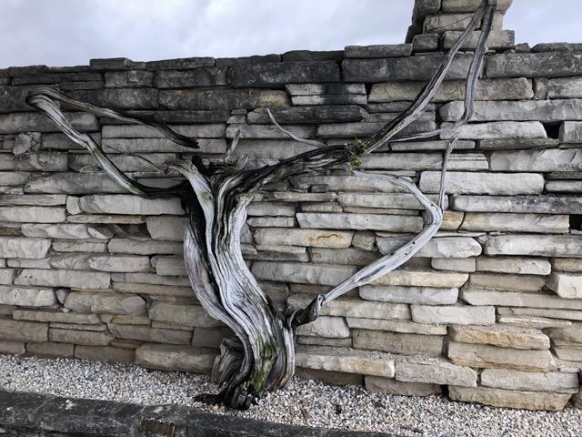 driftwood standing