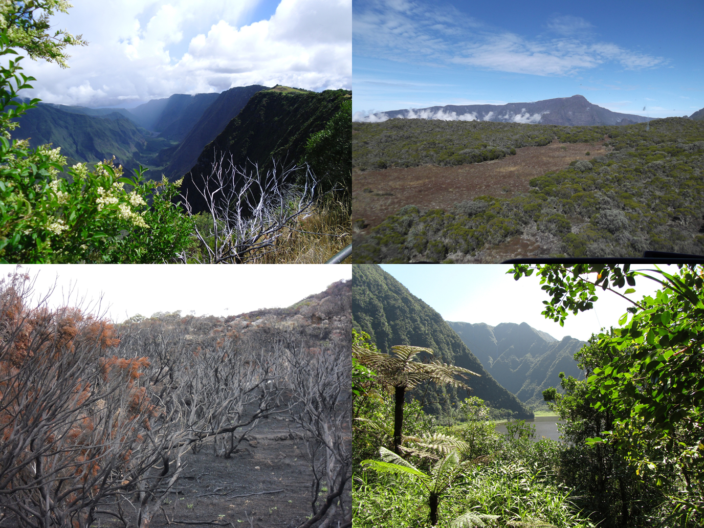 Photographs illustrate the complex topographical and ecological nature of La Réunion Island, with its steep altitudinal gradients, arid and wet areas, and re-generating habitats. Figure 3 in  book chapter .