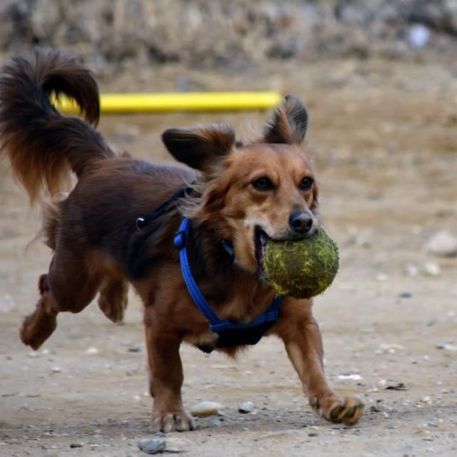 Columbia Heights Dog Park dog running.jpg