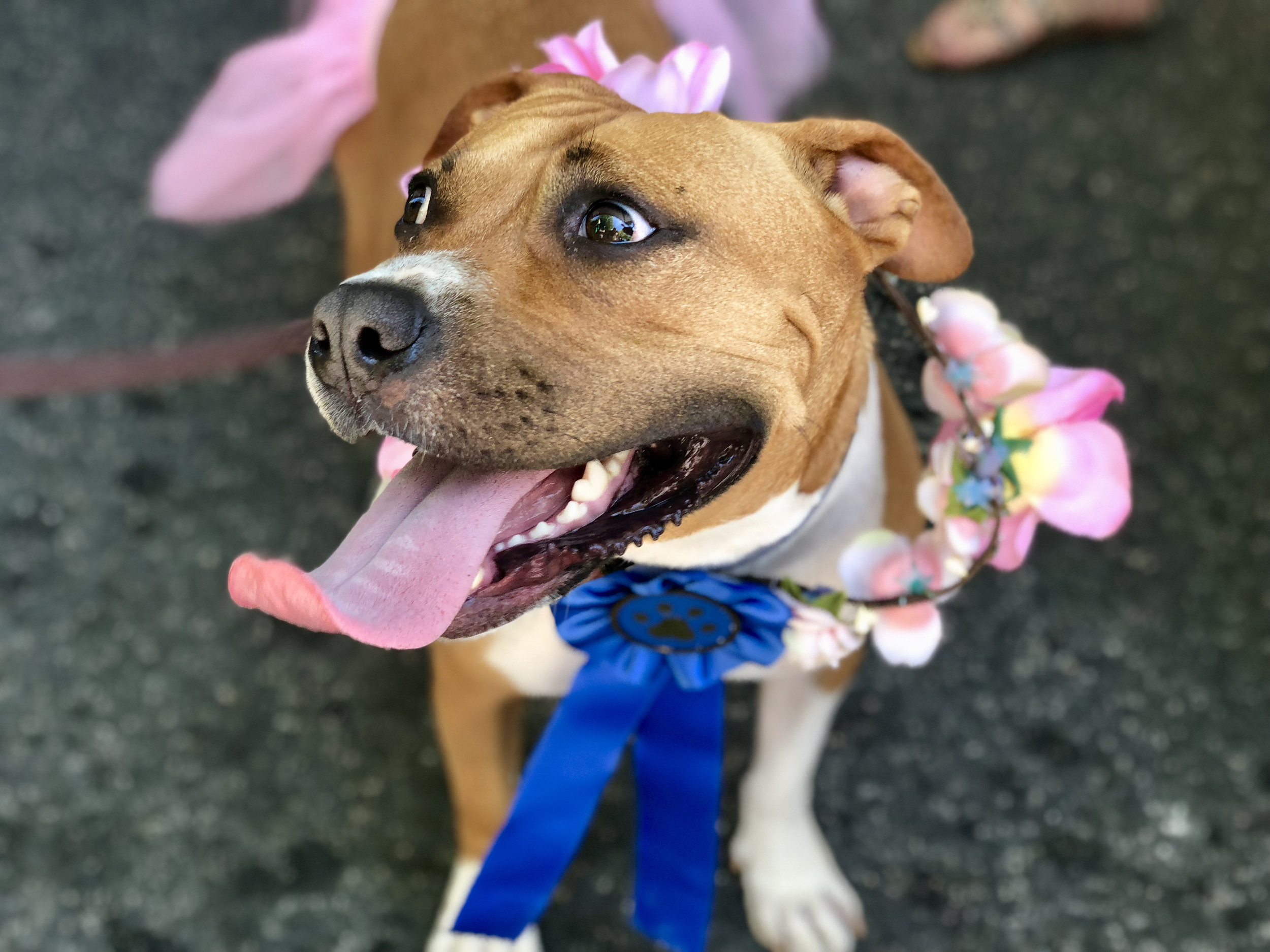 Summer stopped by the 11th & Bark table after winning first prize for best dressed at the Dog Show.