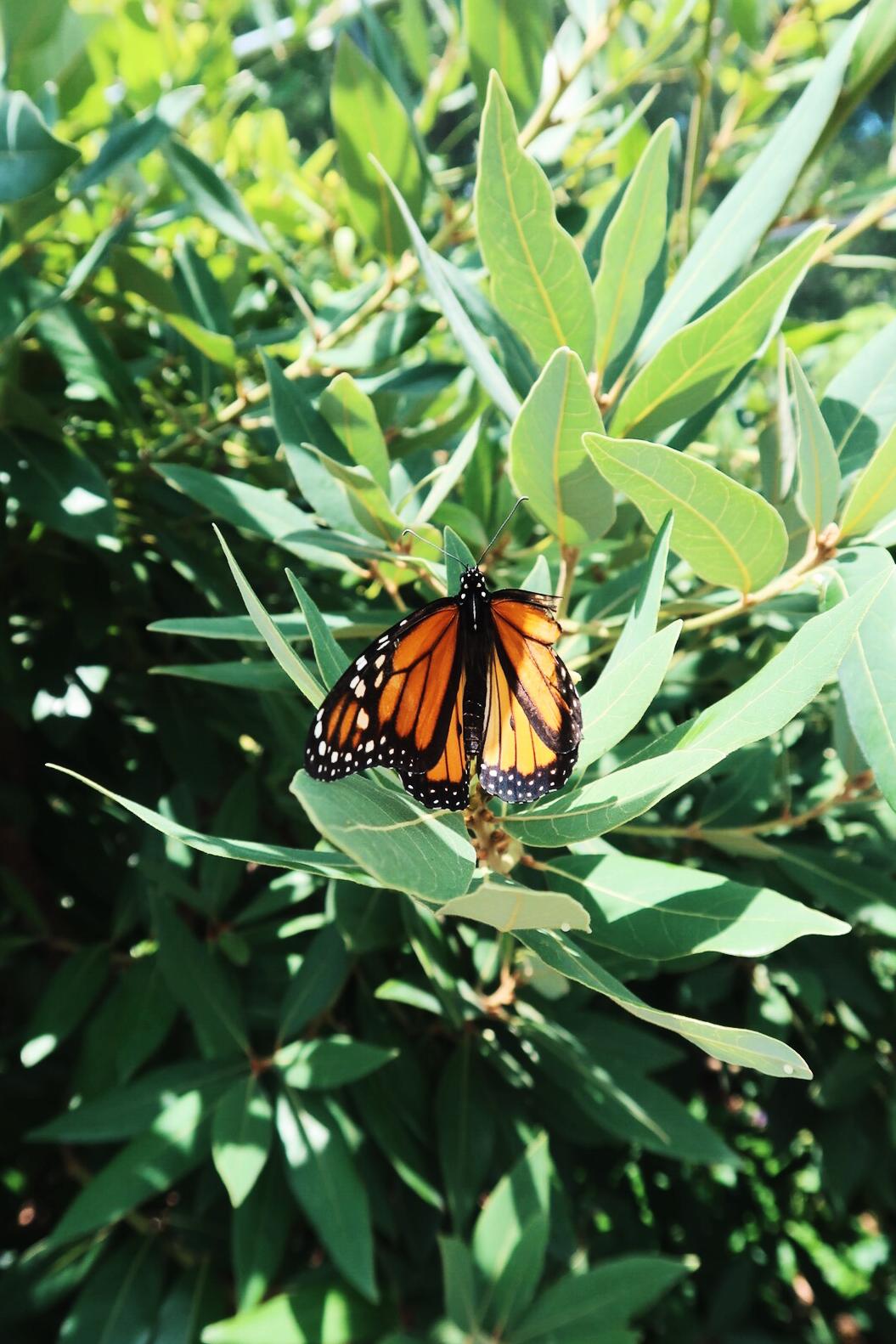 蝴蝶區   Butterfly House
