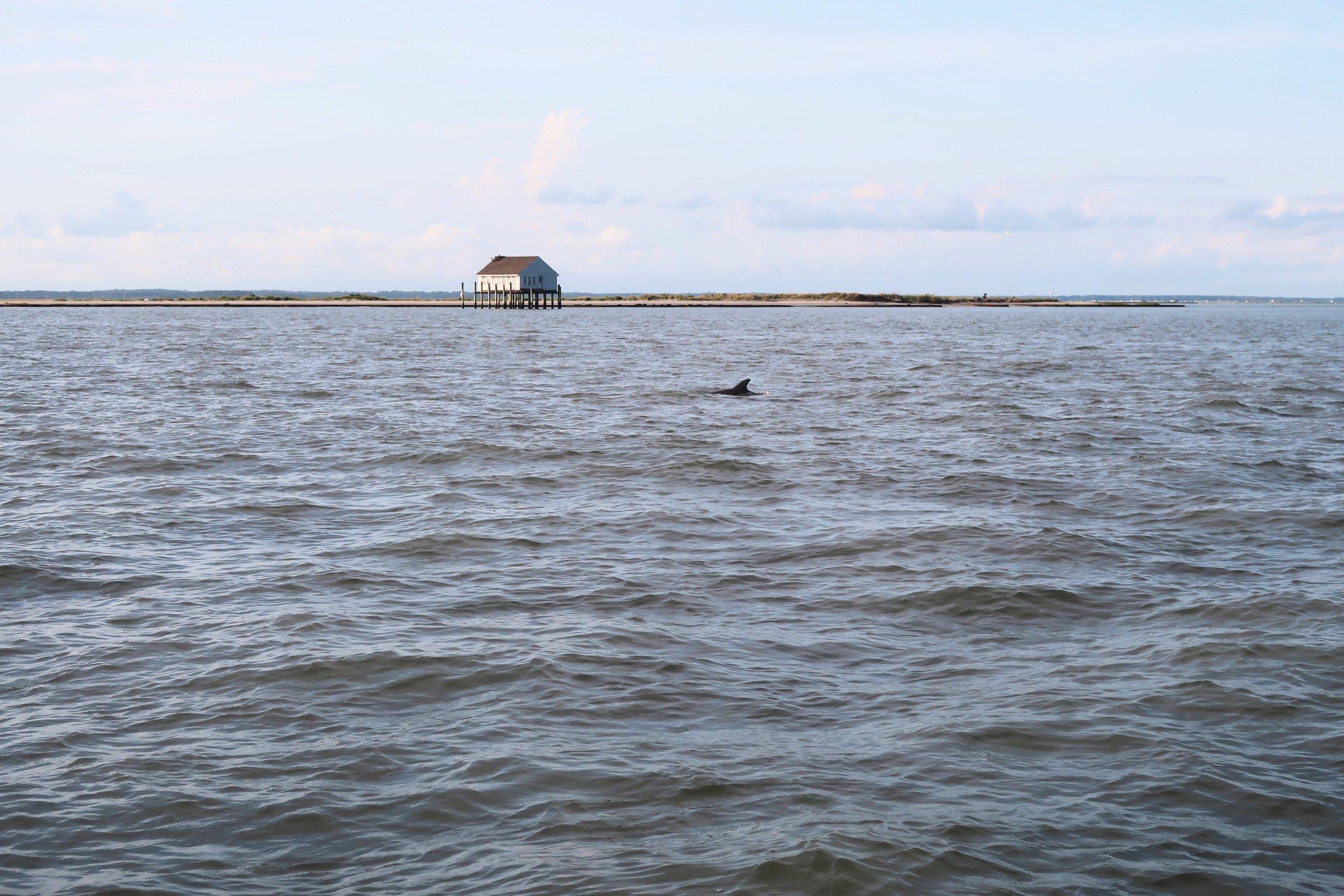 Spot a dolphin | 看到海豚