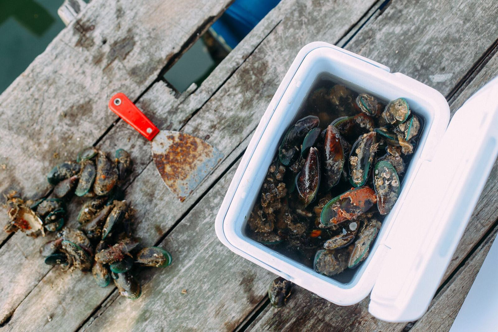 Orhand Agraian - Fish farmers_Seafood subscription (4).jpg