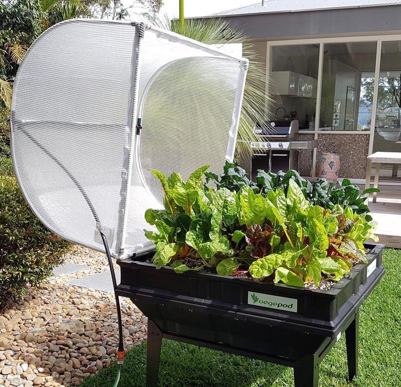 Vegepod -vegetable kits.jpg