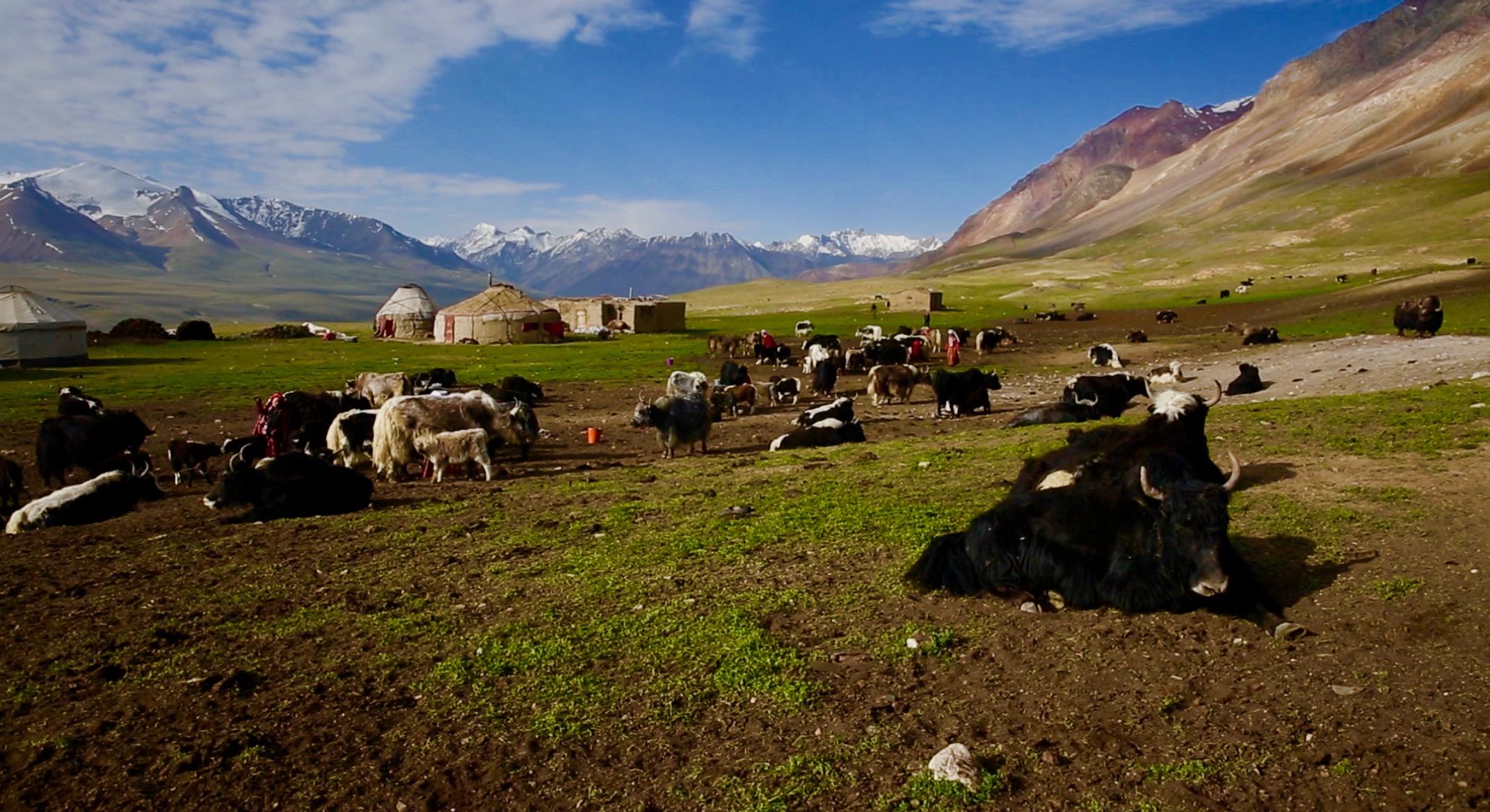 Nomadic Tribe in Afghanistan