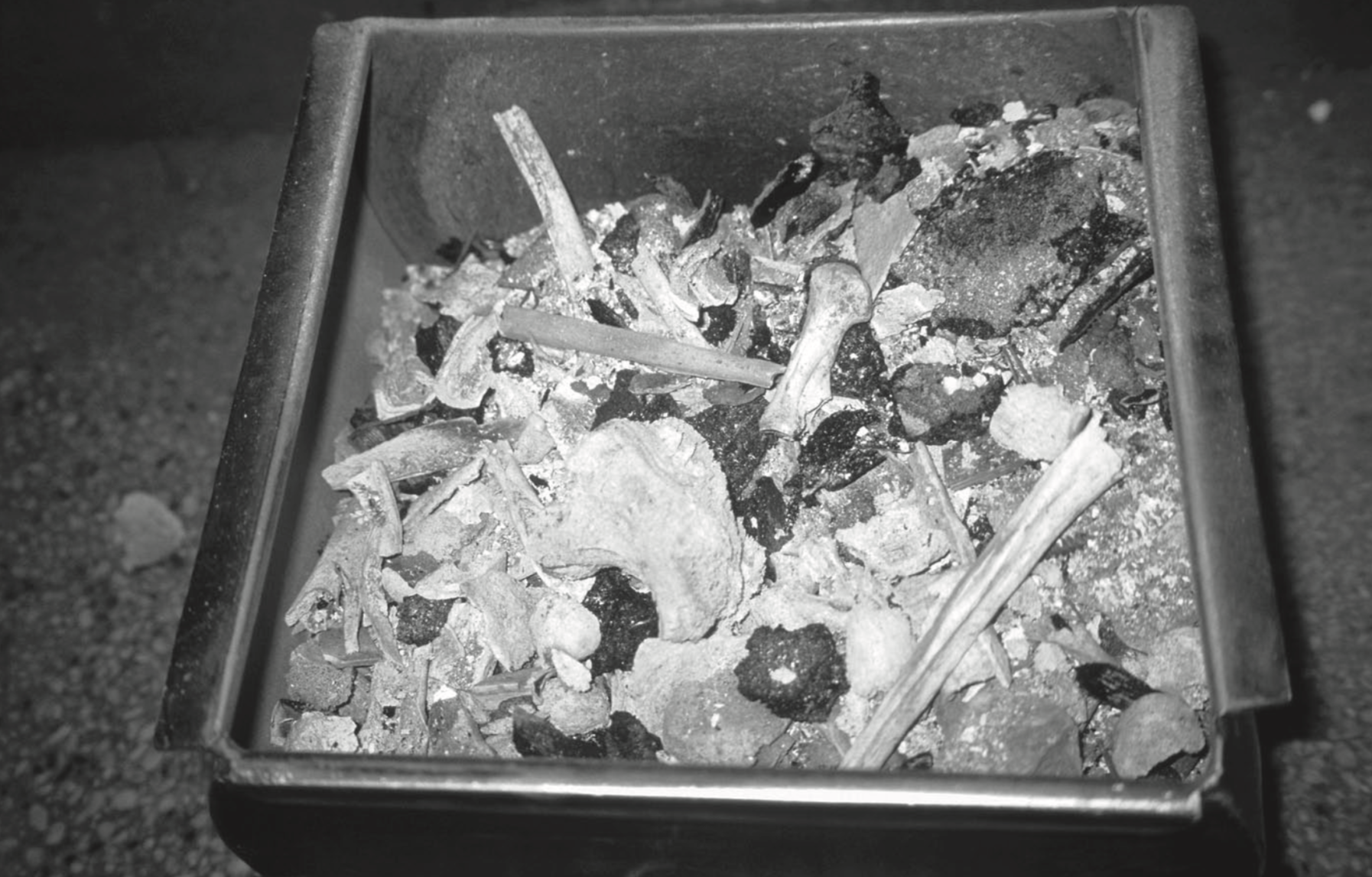 Bones from a modern cremation prior to grinding at møllendal crematorium. credits: Terje østigård